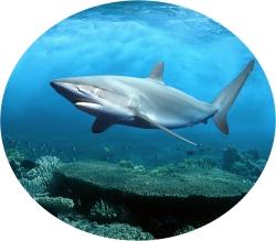 акулий хрящь для суставов
