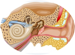 особенности слуха