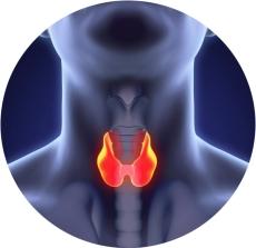 щитовидная железа дефицит йода в организме
