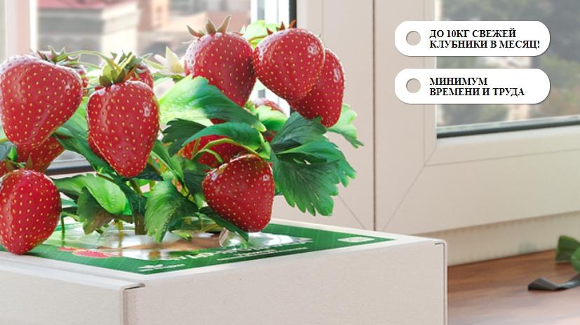 выращивание ягод в домашних условиях